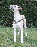 Walk Your Dog With Love Arnés para Perros con Peso de Entre 11 y 29 kg, tamaño de Cintura: 53-81 cm, Color marrón