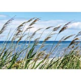 Vlies Fototapete PREMIUM PLUS Wand Foto Tapete Wand Bild Vliestapete - Meer Strand Schilf Pflanzen Himmel - no. 2201, Größe:416x254cm Vlies