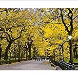 Pintura por Números DIY Lienzo S Paisaje Imágenes Arte de la Pared para la decoración del hogar Nueva York Central Park Otoño Adulto 40X50 CM Sin Marco