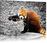 Carino Panda rosso Nero / Bianco, Dimensioni: 120x80 su tela, XXL enormi immagini completamente Pagina con la barella, stampa d'arte sul murale con telaio, più economico di pittura o un dipinto a olio, non un manifesto o un banner,