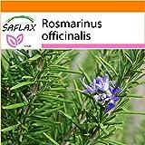 SAFLAX - Garden in the Bag - Romero blanco - 100 semillas - Rosmarinus officinalis
