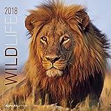 Wildlife 2018 - Broschürenkalender (30 x 60 geöffnet) - Tierkalender - Wandplaner
