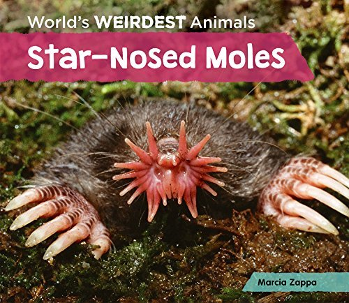 Star-Nosed Moles (World's Weirdest Animals) by Marcia Zappa (2015-09-06) Star Nosed Mole