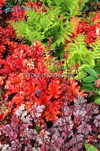 cs Sonder Gras Samen Specialized Rasensamen Evergreen Stauden Echte Pflanzen Abdeckung und Verschönern Bodenfreiheit * Haustier Liebe ()