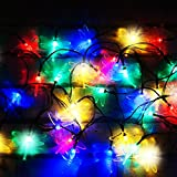 50 Multi-Colour LED Dragonfly Solar Fairy Lights / Solar String Lights by SPV Lights: The Solar Lights & Lighting Specialists