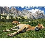 Wunderschöne Haflingerwelt (Wandkalender 2019 DIN A4 quer): Haflinger in wunderschöner Natur (Monatskalender, 14 Seiten ) (CALVENDO Tiere)