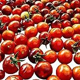 Blaue Tomate