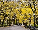 Dirart Sin Marco Diy Pintura Digital Bricolaje Pintura Al Óleo Lienzo Pinturas Por Números Paisaje Imágenes Arte De La Pared Para La Decoración Del Hogar Nueva York Central Park Otoño 40X50Cm