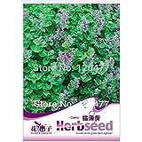 Catnip plantas aromáticas, semillas de hierba gatera, plantas aromáticas, semillas de alrededor de 50 partículas