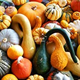 PLAT FIRM SEMILLAS PLAT-FIRM Bellfarm Mixta calabaza calabazas ornamentales * Semillas (sin suelo), 10pcs, paquete profesiona