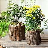 YANZHEN Retro vasi da fiori in legno, i tronchi ecologici originali, i vasi di piante multi-carne Home Decoration ( dimensioni : 12*13cm+15*16cm )