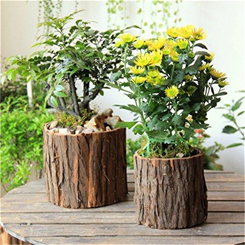YANZHEN Retro Holz Blumentöpfe, die ursprünglichen ökologischen Stümpfe, Multi-Fleisch Pflanze Töpfe Home Decoration ( größe : 12*13cm+15*16cm ) (Holz Stümpfe)