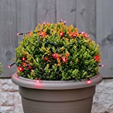 batteriebetriebene, wetterfeste Innen & Outdoor Lichterkette - 2m - 20 LEDs - zusätzliche Timer & Blink-Funktion, von Festive Lights (rot)