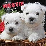 West Highland White Terrier Puppies - West Highland White Terrier Welpen 2019 - 18-Monatskalender mit freier DogDays-App (Wall-Kalender)