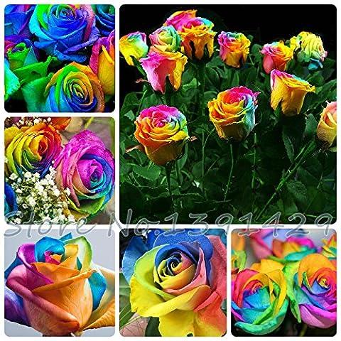 100 Samen Seltene Holland Regenbogen-Rosen-Blumen-Liebhaber-Multi-Color-Pflanzen Home Garten seltene Regenbogen Blumensamen Rose