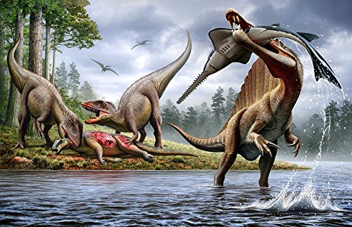 Mohamad Haghani/Stocktrek Images – Spinosaurus hunting an Onchopristis with a pair of Carcharodontosaurus in background. Photo Print (44,70 x 28,96 cm)