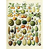 meishe Kunst Vintage Poster Print Obst Zuordnung Referenz Collection Diagramm Diagramm K?che Esszimmer Restaurant Wand Decor Wassermelone Ananas Pfirsich Banana 20.47'' x 27.56''