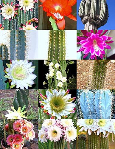 Farmerly Cereus Cactus Mix, Rare Garden Night Cacti Exotic Desert Succulent Seed 50 Seeds