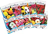 Garden Care Flowers Seed For Winter Season (Pack Of 10)