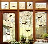 Mabi-IN-Design 12pour Oiseaux–Oiseaux fenêtre Verre fenêtre de Rapaces b416