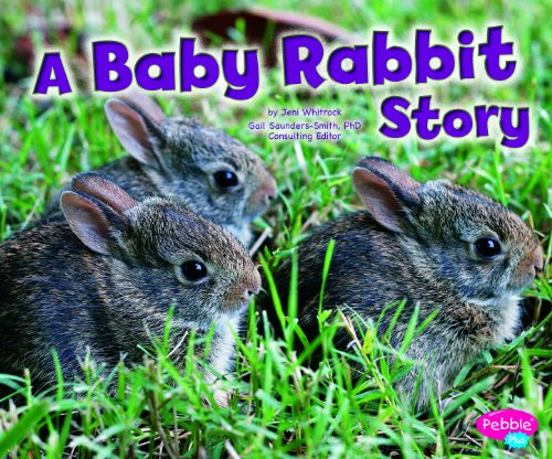 A Baby Rabbit Story Hardcover