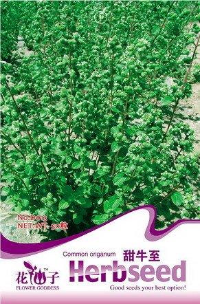 Chinois thé vert arbre Graines 20pcs / sac Bonsaï Graines bricolage SeedsAndPlants Jardin des Plantes DIY Bonsai Graines