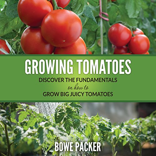 growing-tomatoes-discover-the-fundamentals-on-how-to-grow-big-juicy-tomatoes