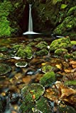Fine Art Print – Mossy Stream near Loch Maree, Fiordland NP, Neuseeland von Bentley Global Arts Gruppe, canvas, multi, 10 x 16