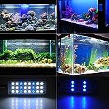 Fische Tank Aquarium Klipp Lampen Licht Installationssatz flexibel Tastenschalter 24LED 3 Modus 1,5 W Weiß Blau