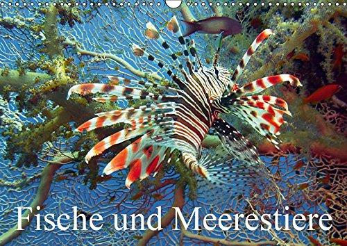 Fische und Meerestiere (Wandkalender 2019 DIN A3 quer): Die farbenfrohe Unterwasserwelt unserer Ozeane (Monatskalender, 14 Seiten ) (CALVENDO Tiere)