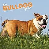 Bulldog Puppies - Bulldoggen Welpen 2019 - 18-Monatskalender mit freier DogDays-App (Wall-Kalender)