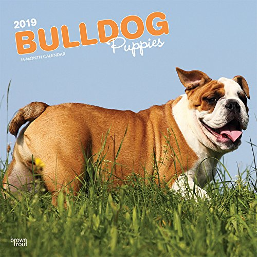 Bulldog Puppies - Bulldoggen Welpen 2019 - 18-Monatskalender mit freier DogDays-App: Original BrownTrout-Kalender [Mehrsprachig] [Kalender]