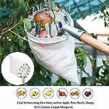 Raccogli frutta leggero testa, argento raccogli frutta cestino swop-top testa per raccolta di Apple Orange Fruit Picking Tool