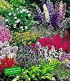 BALDUR-Garten Buntes Staudenbeet 'Multi-Colour'