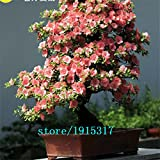 10pcs seltenen japanischen Sakura-Samen Kirschblüte Samen Bonsai Pflanzen für Haus & Garten