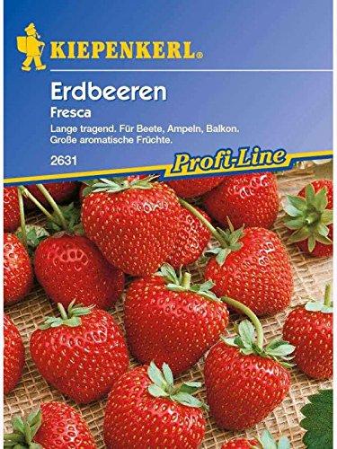 erdbeeren-fresca