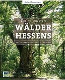 Die schönsten Wälder Hessens