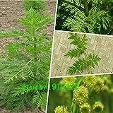 Nuevo Hogar Jardín de Plantas 100 Semillas Semillas Artemisia annua - Un año de artemisa envío gratuito