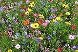 36 Arten - Wildblumen Mischung Samen
