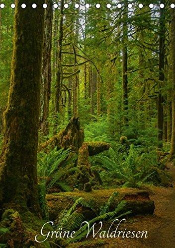 Grüne Waldriesen / 2018 (Tischkalender 2018 DIN A5 hoch): Uralte Bäume und grüner Regenwald an der nordamerikanischen Westküste (Monatskalender, 14 ... [Kalender] [Apr 01, 2017] Metzke, Angelika