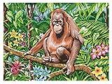Mammut 109204 - Malen nach Zahlen Tiere der Welt-Orang Utan, ca. 40 x 30 cm