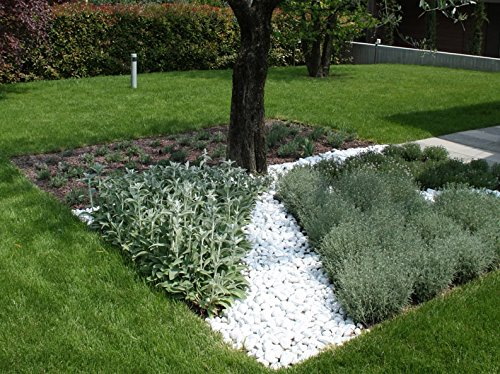 4 sacchi da 25kg ciottoli di marmo bianco carrara 40 60 mm sassi pietre giardino - Ciottoli bianchi giardino ...