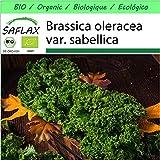 SAFLAX - Jardin dans la boîte - BIO - Chou frisé vert - Westland Winter - 70 graines - Avec pot en argile, support, substrat de culture et engrais - Brassica oleracea