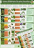 Essbare Wildkräuter für Grüne Smoothies - Erkennungskarte Teil 2 (2016) -: Schnell eindeutig erkennen, selber sammeln und mit gutem Gefühl genießen (laminiert - DINA4)