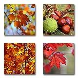 Herbst - Set A schwebend, 4-teiliges Bilder-Set je Teil 29x29cm, Seidenmatte moderne Optik auf Forex, UV-stabil, wasserfest, Kunstdruck für Büro, Wohnzimmer, XXL Deko Bild