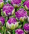 """BALDUR-Garten Tulpe""""Blue Wow"""",10 Stück von Baldur-Garten - Du und dein Garten"""