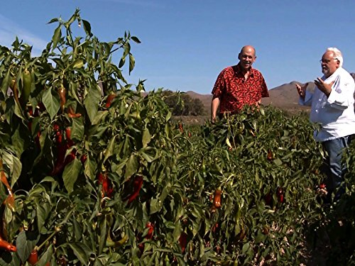 chili-peppers-fruit-of-new-mexico