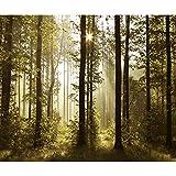 decomonkey Fototapete Wald 300x210 cm Tapete Wandbild Bild Fototapeten Tapeten Wandtapete Landschaft Baum Natur