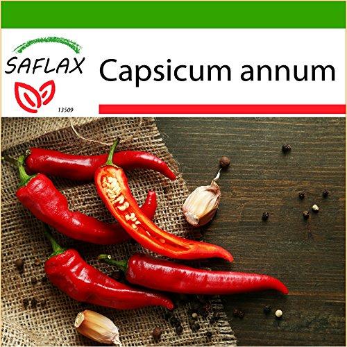 Galleria fotografica SAFLAX - Peperoncino di Cayenna - 20 semi - Con substrato - Capsicum annum