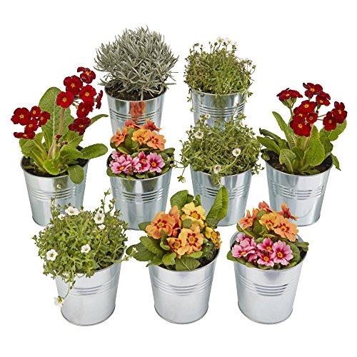 Garden Grow Garten wachsen Blumentopfständer Garten-Blumen-Kräuter-Anzeige, die abgestufte Regale für im Freien u. In der Halle (9 Satz kleine Zinkpflanzer) faltet